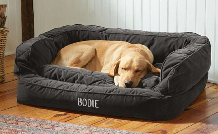 Find Out What Makes a Good Pet Bed For Complete Comfort and Safety